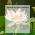 lotus31