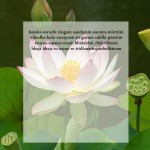 lotus5a