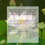 lotus61