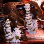 elefantes-new